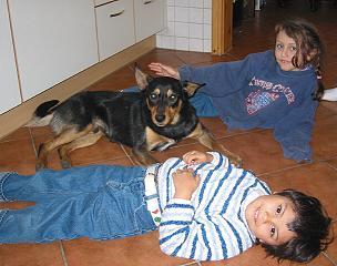 Noonbarra Kelpie as a pet for children: Noonbarra Scott and Mate in Germany