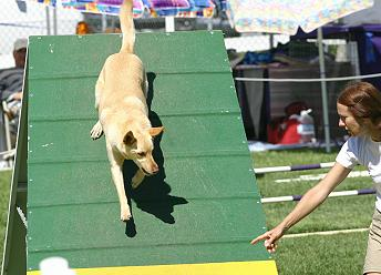 Noonbarra Scamper: Flyball Frisbee Agility: Australian Working Kelpies and Dog Sports