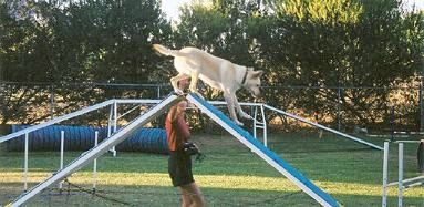 Noonbarra Scamper - Flyball Frisbee Agility: Australian Working Kelpies and Dog Sports