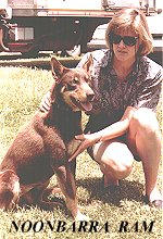 Australian Working Kelpies as Pets - NOONBARRA RAM WITH KYLIE HOLLAND OF CARCOAR
